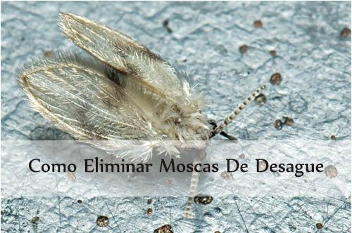como eliminar moscas de desague