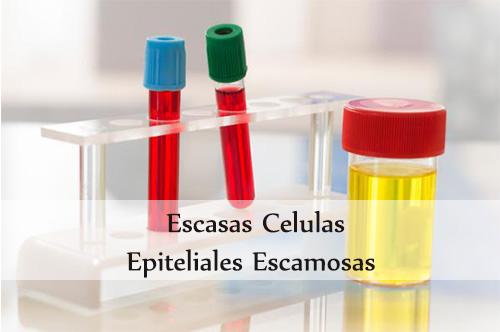 escasas celulas epiteliales escamosas