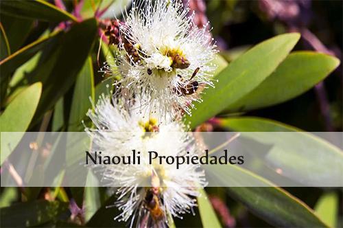niaouli propiedades