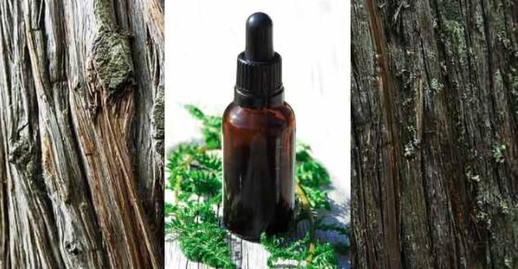 Usos y beneficios comprobados del aceite esencial de cedro